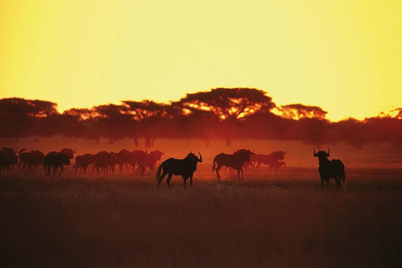 Diario de un safari, parte 1
