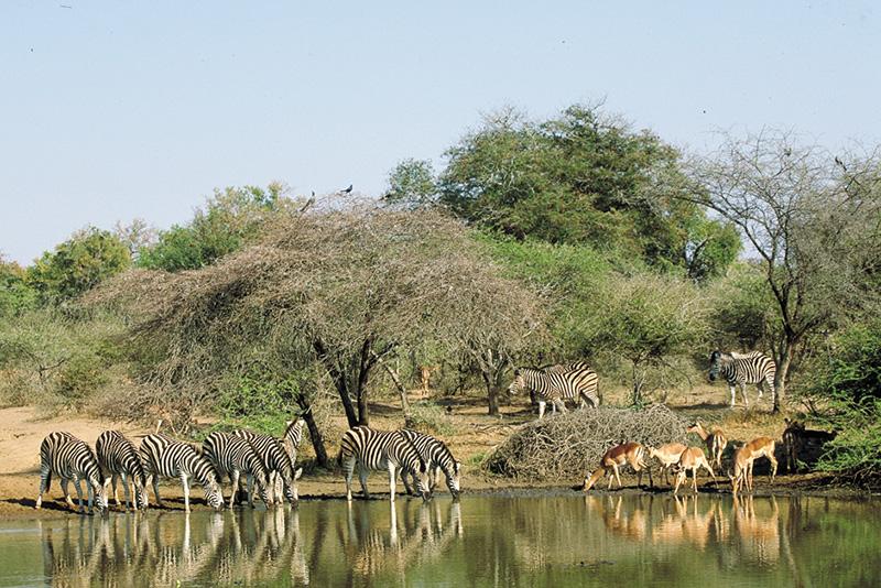 Diario de un safari, parte 2