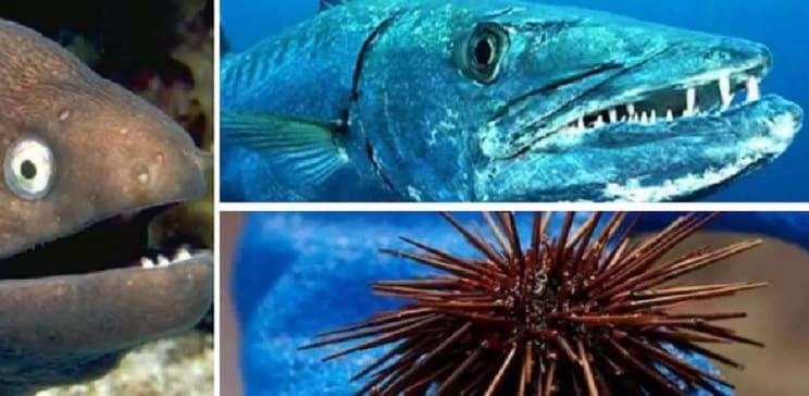10 criaturas marinas peligrosas y las consecuencias de su ataque