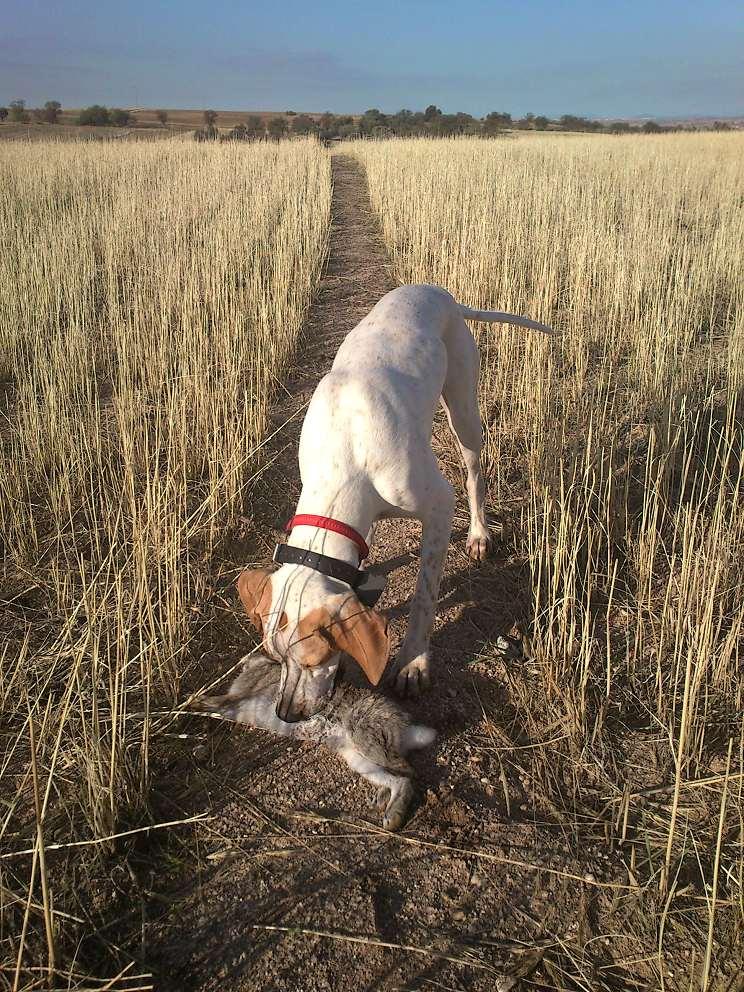 10 consejos para criar tu perro de caza