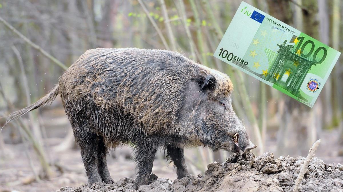 La Administración pagará a los cazadores 100 euros por cada jabalí abatido en Alemania