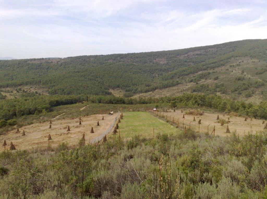 Preparando el hábitat de reintroducción para el estudio