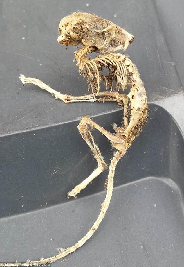 Un inglés encuentra el esqueleto de un extraño animal en un armario de la cocina