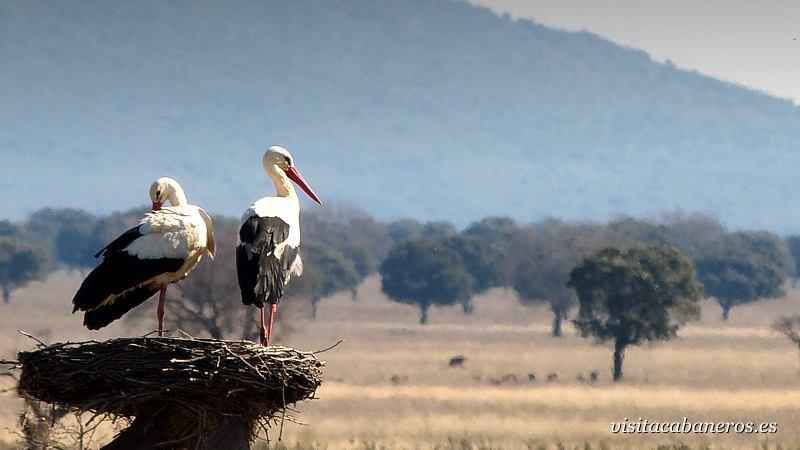 Parque Nacional de Cabañeros, uno de los Parques donde se practica la caza. / Visitacabaneros.es