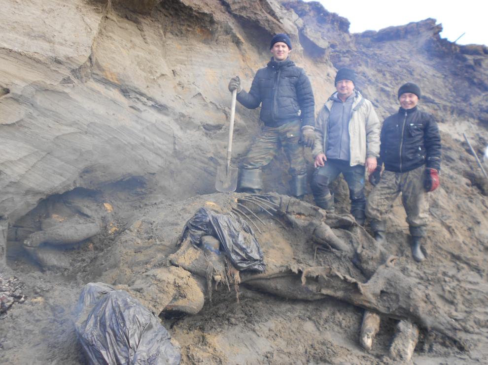 Un mamut cazado hace 45.000 años podría reescribir la historia