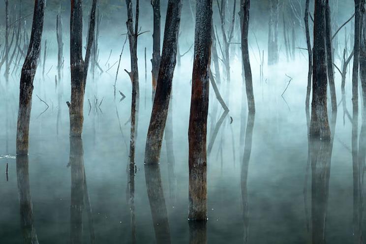 La niebla de la mañana empaña los árboles muertos del lago Cuejdel de Rumania, un embalse natural creado por los deslizamientos de tierra. / Fotografía: Infobae