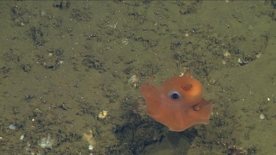 150616151718-adorable-octopus-2