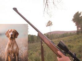 perro dispara