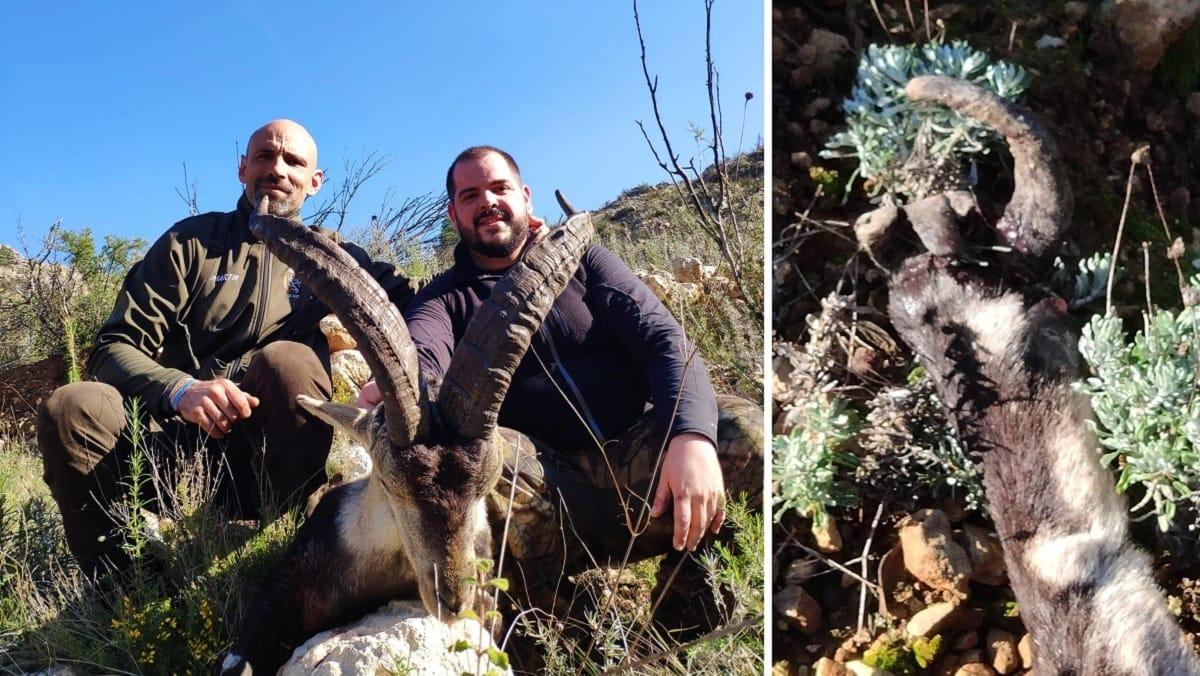 Un macho montés les ataca y, tras cazarlo, se llevan esta sorpresa