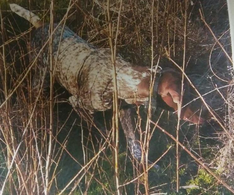 Roban a un niño de 9 años la perra de caza que él mismo había adiestrado
