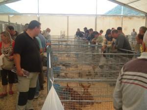 Imagen de ediciones anteriores / Foto: radiohuesca.com