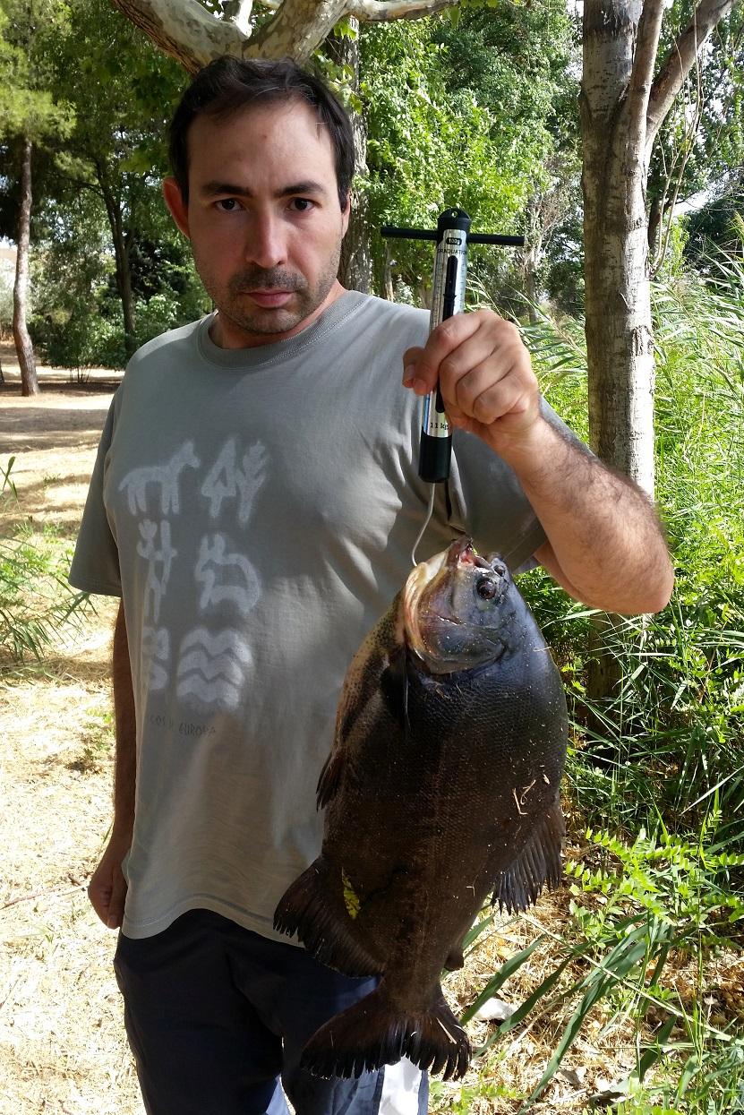Pescan en Madrid un pez 'cometestículos'