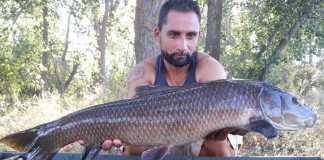 barbo pescado