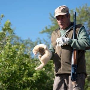 El hurón: todos los cuidados necesarios para criar a este compañero de caza