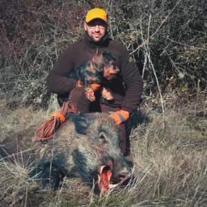 Cómo rastrear un jabalí herido con perro de sangre