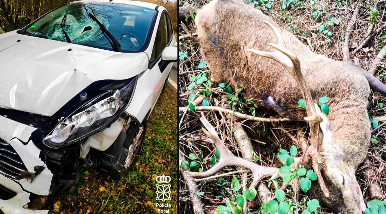 Dos heridos tras estrellarse contra un gran ciervo en Navarra: su cuerna atravesó la luna