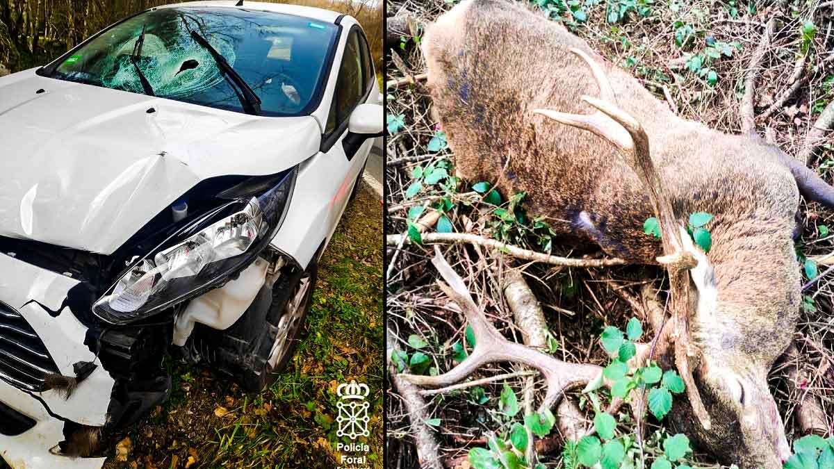 El ciervo, tras ser atropellado por el vehículo. © Twitter