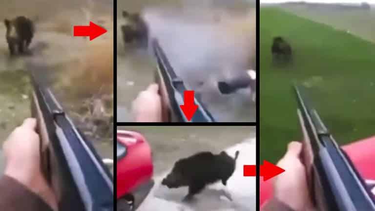 cazador dispara cuatro veces a un jabalí