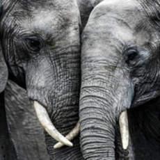 Un elefante mata a un hombre en Cantabria
