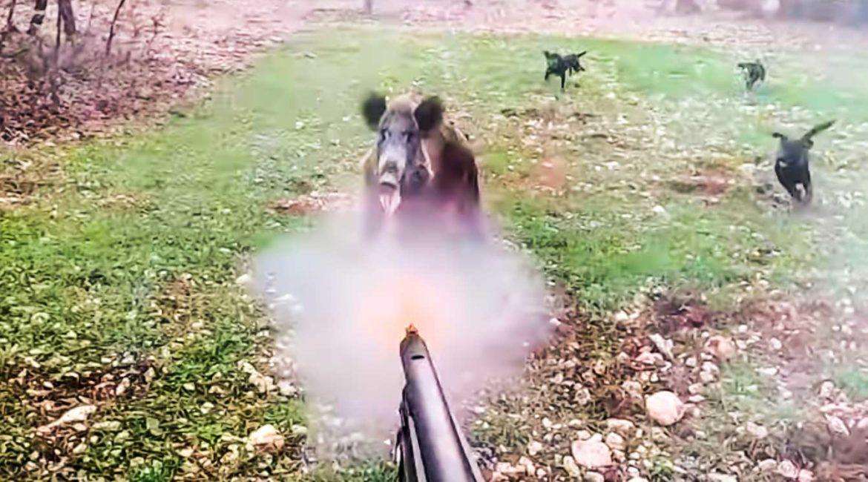 Un jabalí ataca a un cazador y le clava sus colmillos en Salamanca