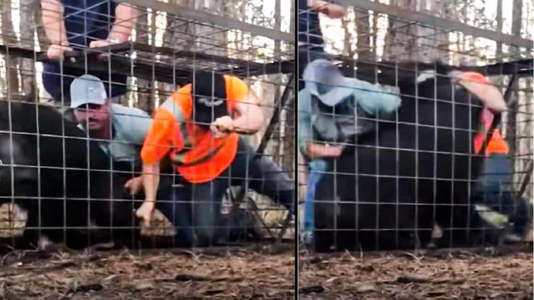 El jabalí irrumpe contra los dos hombres en la jaula. @ Facebook