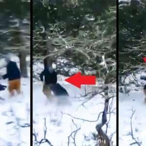 Un jabalí desarma al cazador que le disparó y le da una tunda