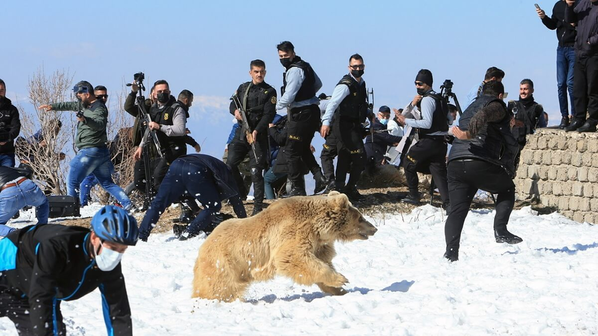 oso ataca kurdistan
