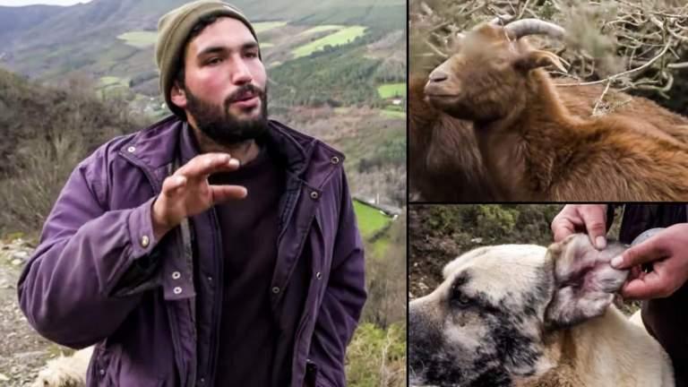 Rubén cría cabras en peligro de extinción que el lobo, que no lo está, le mata.