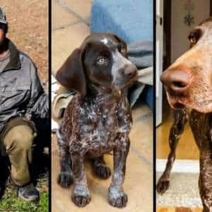 Pierde su perra de caza en Badajoz y aparece en una protectora de Madrid que le exige 2000€ por ella