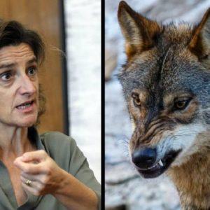 Así puedes alegar contra la prohibición de la caza del lobo con solo dos clics