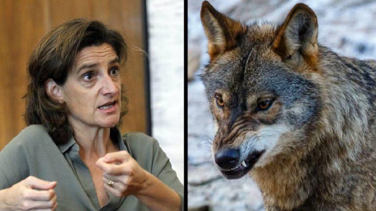 Teresa Ribera y lobo