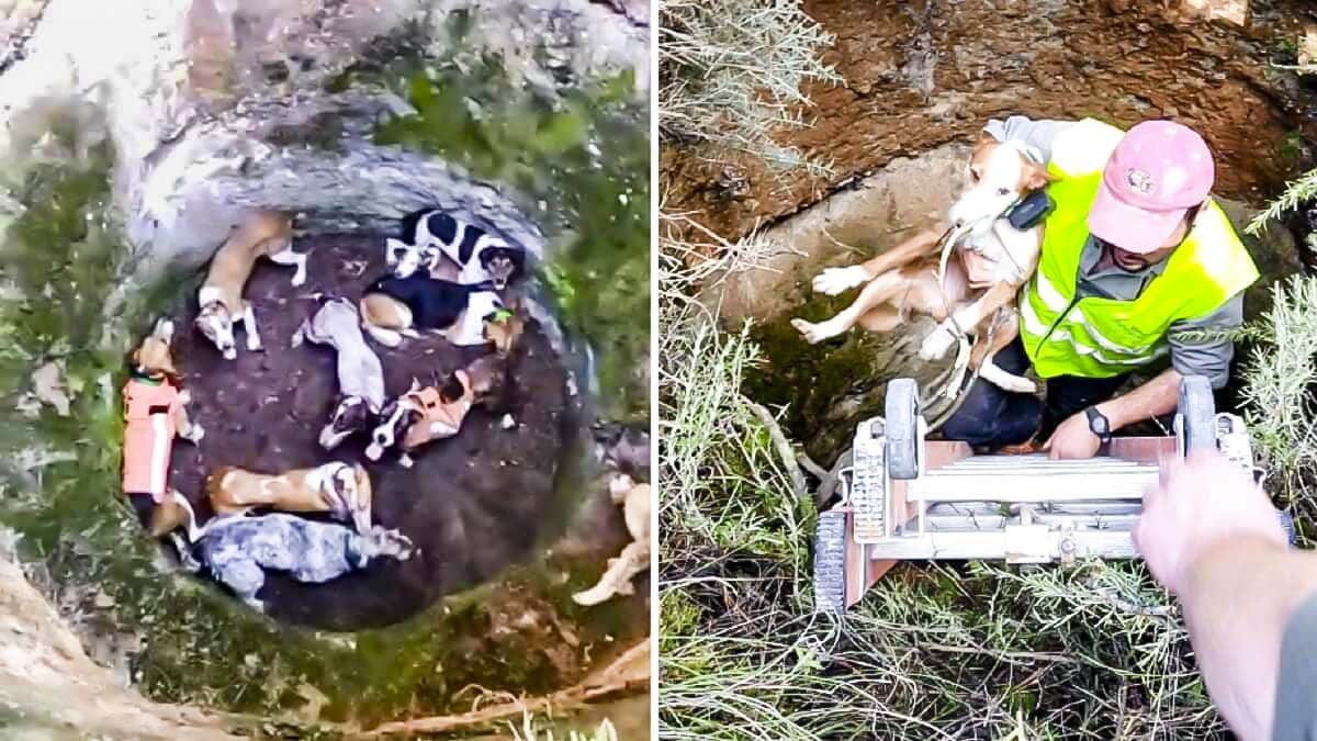 Así encontraron a 10 perros a los que la tierra se tragó mientras seguían el rastro de un corzo