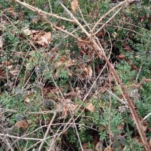¿Eres capaz de ver la pieza de caza escondida en esta foto?