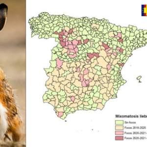 Esta es la situación de la mixomatosis que afecta a las liebres de España a fecha de hoy