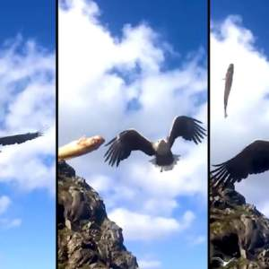 Graba a cámara lenta cómo un águila 'caza' un pez al vuelo