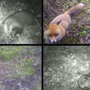 Un cazador vasco coloca una cámara trampa y cuando revisa la tarjeta se encuentra con esta sorpresa