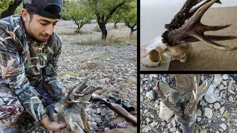 caza corzo raro 8 puntas