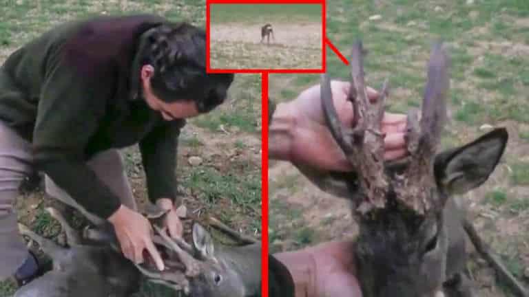 El cazador trata de salvar al corzo.