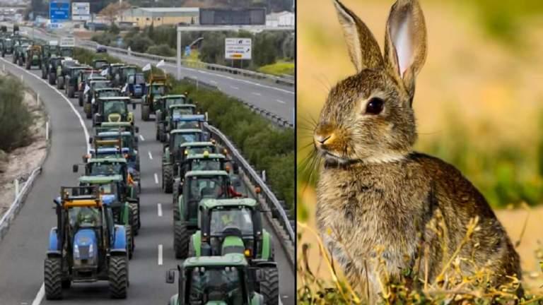 conejo y tractores de agricultores