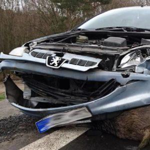 Accidentes con especies de caza: equipan a un jabalí con un GPS y éste cruza 3.300 carreteras en un año