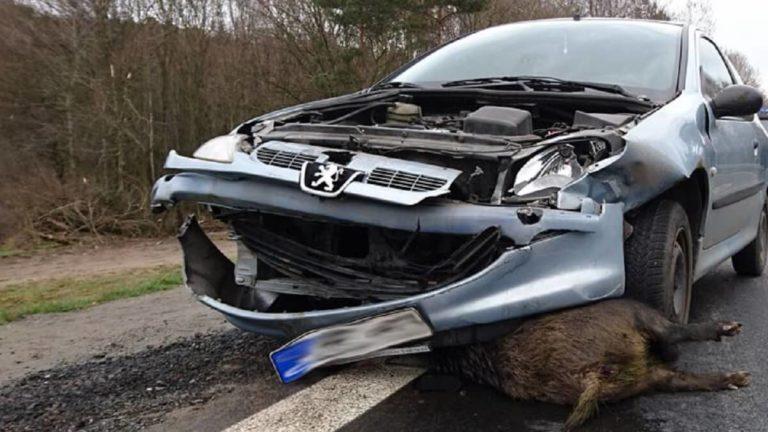 jabali carretera accidente