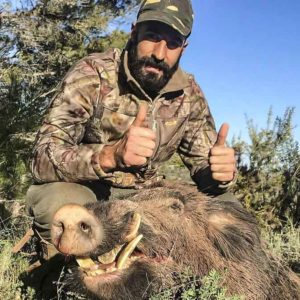 Así se caza un gran jabalí en espera grabándolo con varias cámaras
