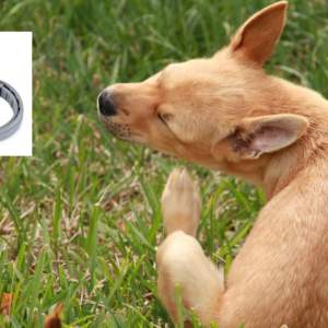 Estudian la muerte de 1.700 mascotas asociada a este famoso collar antipulgas