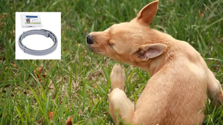 muerte mascotas collar antipulgas seresto