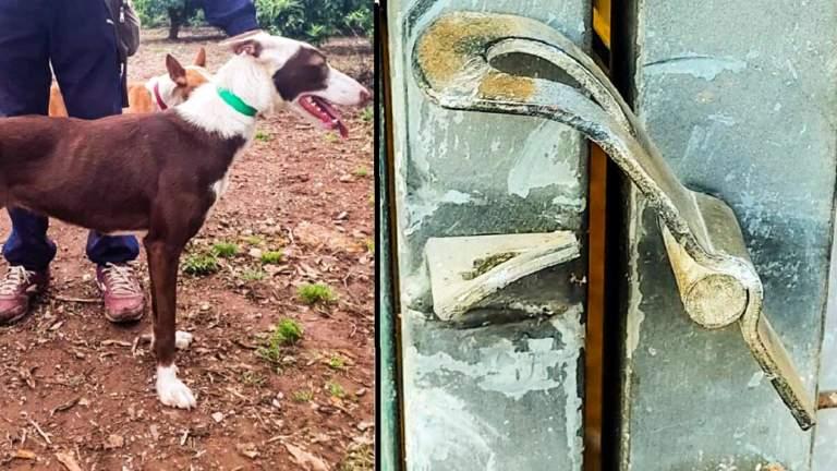 La podenca robada y los daños en la cerradura forzada. © S. P.