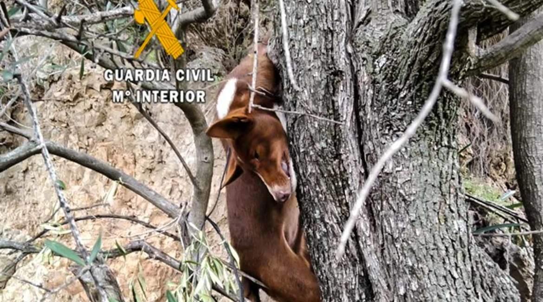 La FAC llevará a juicio a los dos «delincuentes» que ahorcaron a un perro de caza en Málaga
