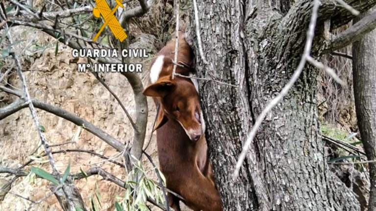 Perro de caza ahorcado.
