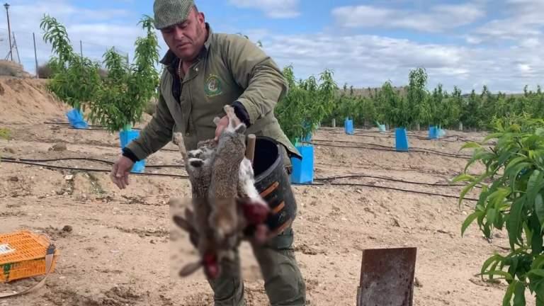 El Pencho con varios conejos muertos.