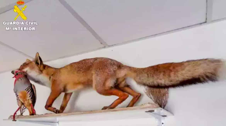 El Seprona requisa tres perdices, una liebre, un zorro, una codorniz y una gineta disecados en un refugio de cazadores