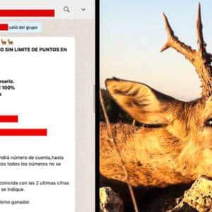 Sorteos de caza a través de WhatsApp ¿chollo o estafa?